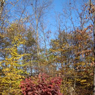 Last view of autumn