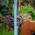 Papillons 2009